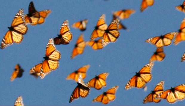 el-vuelo-de-las-mariposas color
